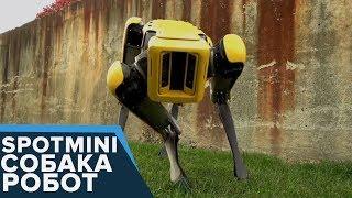 New SpotMini - СОБАКА-РОБОТ - НЕВЕРОЯТНО! Boston Dynamics