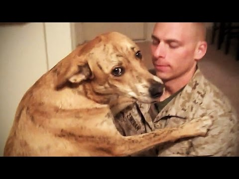 TRY NOT TO CRY: Dogs Meet Their Owner After Long Time II [NEW] (HD) [Funny Pets]