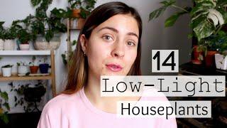 14 Low-Light Houseplants! | Plants That Survive Low Light.