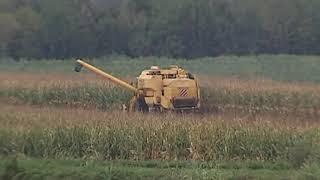 VIDEO NEWS  |  21 OTTOBRE 2019  |  AGRICOLTURA, DOPPIA TRUFFA  PER OTTENERE I FONDI EUROPEI