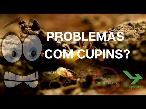 problemas-com-cupins