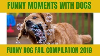 funny moments with dogs | funny dog fail compilation 2019