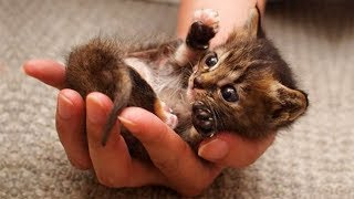 Cute is Not Enough - Cute Cats and Kittens Doing Funny Things 2018 #11