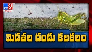 Locusts create chaos in Anantapur..