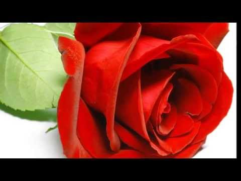 Ocarina  Rose-Mary reggae