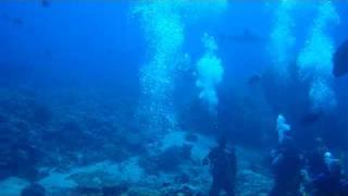 オグロメジロザメ2