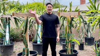 E3: How to Grow Dragon Fruit From Cutting to Fruit