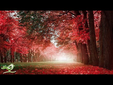 Beautiful Relaxing Music: Romantic Piano Music, Violin Music, Cello Music, Guitar Music ★74