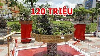 Hòn non bộ duy nhất tại triển lãm cây cảnh Hải Phòng đã có giá 120tr qua đối thoại của chú Vinh