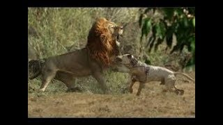 When dogs come face to face with wild animals part 2!!!
