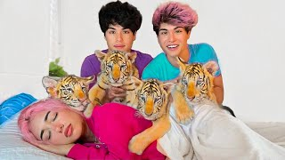 SURPRISING BESTFRIEND WITH BABY TIGERS!!