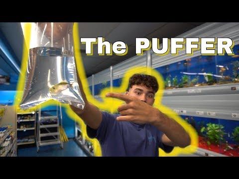 WE Got The PUFFERFISH!