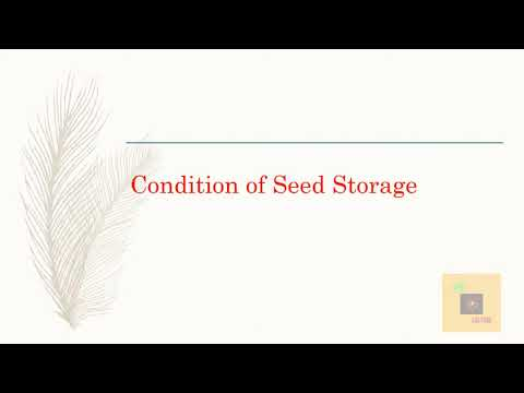 Seed Processing Activity
