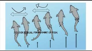 Madhyamik  Life Science Suggestion 2019 on cholon o gomon mach  (movement and locomotion fish)