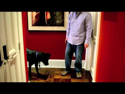 """Training Your Dog to """"Leave It"""""""