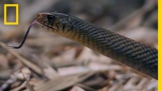 ヘビVSヘビ