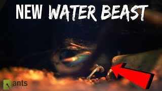 Ants vs. Kraken (Water Monster)