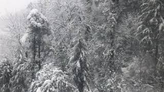 Joshimath to Auli snowfall