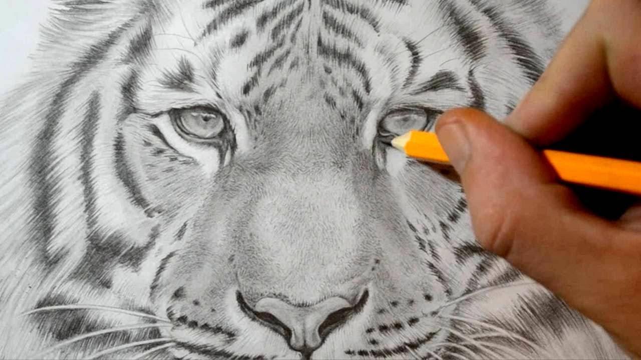 Tigre Sketch: Realistic Pencil Drawing