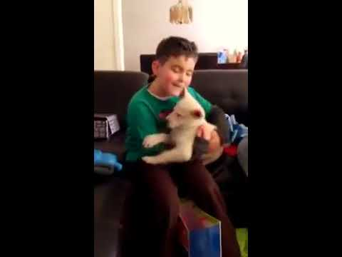 Boy gets his first Puppy,,,, watch his priceless reaction!!