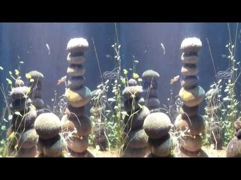 Tiny Fish in Aquarium (YT3D:Enable=True)