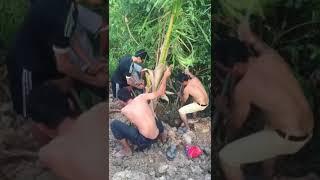 Ăn nhậu xong hội chị em rủ nhau đi trồng dừa, và cái kết 😂...