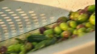 How Olive Oil Is Made