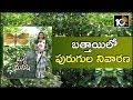 బత్తాయిలో పురుగుల నివారణ: Cultivation Techniques Of Sweet Lemon | Matti Manishi | 10TV News