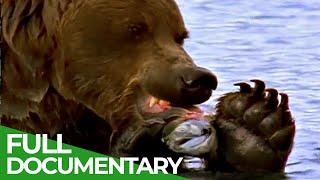 Majestic Bears of Alaska & British Columbia | Free Documentary Nature