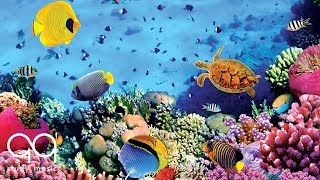 Relaxing Music for Stress Relief 🐠 Beautiful Aquarium 🐢 Soothing Music for Study, Sleep & Spa