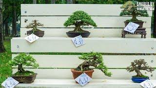 Triển lãm Bonsai mini Việt Nam || Những tác phẩm đẹp nhất
