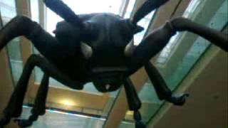 Magnetfisch - der Fensterbär