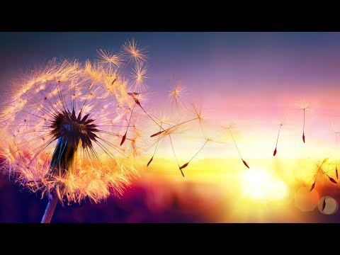Relaxing Music, Peaceful Music, Sleep Music,