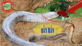 AMAZING VIDEO 06, Bẫy rắn đơn giản hiệu quả & độc đáo, Tiếc gì một like cho anh nông dân này.