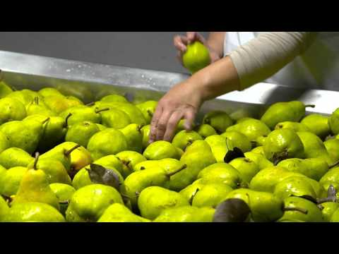 WaGrown Pears S3E11: Matson Fruit Company