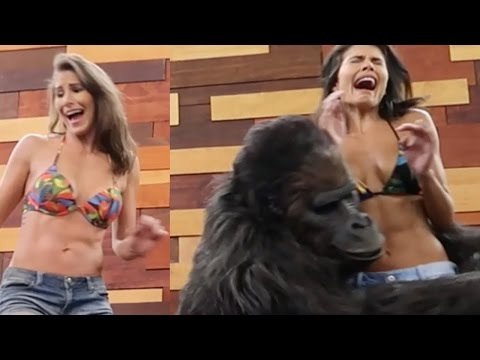 In celebration of National Gorilla Day on September 29, 2016, American Pranksters, a group of anonymous Horror Movie Makers who love to scare the hell out of unsuspecting people, pulled off an epic prank with two Brazilian models and an 800-pound Gorilla named Walter.  It was a horrifying experience for the models until it was revealed the Gorilla is actually a state-of-the-art animatronic primate with a long list of horror movie credits.