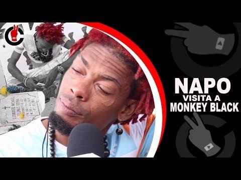 Napo visita a Monkey Black Por Primera Vez & mira lo qué pasa