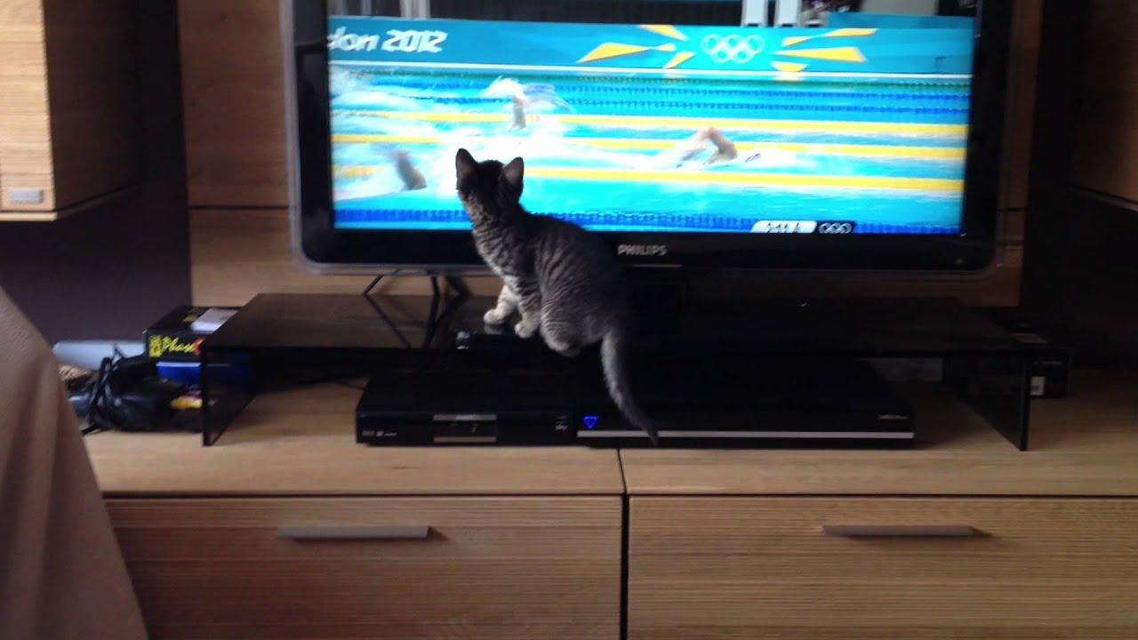 Katze Vor Dem Fernseher Bild: Maxresdefault.jpg