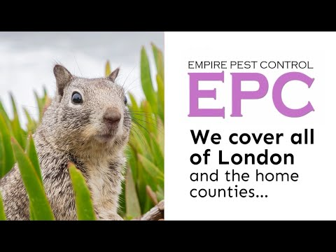 Empire Pest Control: Getting Rid Of Squirrels