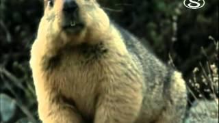 Zvierací rekordmani - Jasnovidci