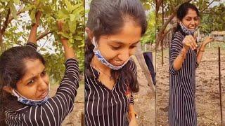 Tollywood singer Madhu Priya plucks Guava fruit, viral vid..