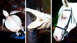 23 động vật bạch tạng hiếm khi được nhìn thấy