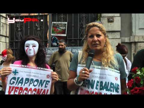 Enpa: stop alla mattanza dei delfini in Giappone