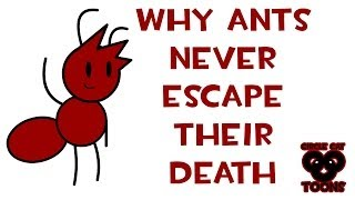 "Why Ants Never Escape Their Death | Ants Life ""Short"" 