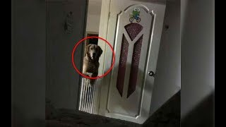 A Man Noticed That His Dog Watched Him Sleep Each Night  Then He Realized The Heartbreaking Truth