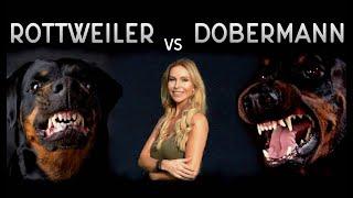 THE DOBERMAN VS THE ROTTWEILER - WHO IS FIERCEST?