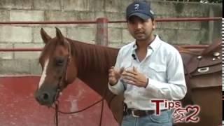 Consejos para subirse al caballo