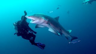SHARK BAIT in the Atlantic Ocean! (DRENCHED Ep. 39)