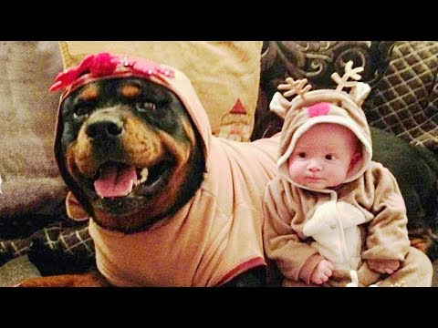 Rottweiler Protecting Babies and Kids Compilation