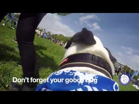 Daisy's top tips for Muddy Dog Challenge